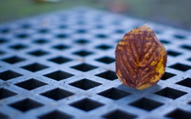 Обои осень, листок, решетка, © Ben Torode