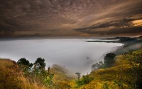 Обои небо, деревья, туман, холмы