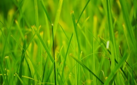 Обои лето, трава, макро, природа