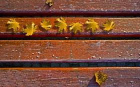 Обои листья, осень, фотографии, осенние обои, настроение, настроения, макро