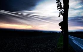 Картинка дорога, дерево, вечер