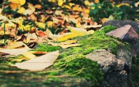 Обои мох, осень, листва, камень