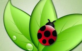 Обои листья, насекомое, божья коровка, вектор