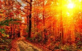Картинка дорога, осень, лес, лучи, свет, деревья