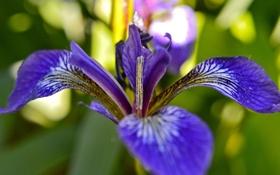 Обои листья, цветок, растение, лепестки, природа