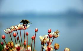 Картинка пчела, небо, цветы