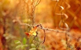 Картинка природа, забор, лист, макро