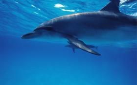 Картинка вода, дельфины, море, океан