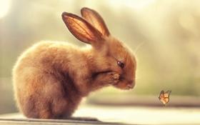 Обои природа, бабочка, кролик