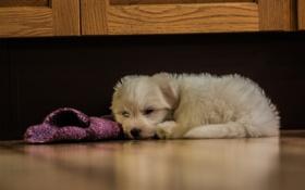 Картинка собака, щенок, скрытый, ленивые