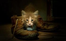 Обои фон, ботинки, кошка