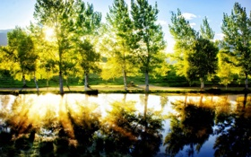 Картинка trees, pond, lawn, sunlight effect