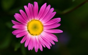 Обои цветочек, wallpaper, лепестки, розовый, цветок, widescreen, фон