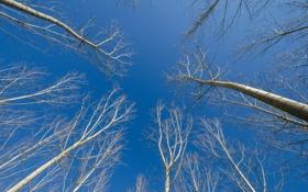 Обои ствол, небо, ветки, деревья