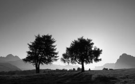 Обои трава, деревья, фото, дерево, обои, пейзажи