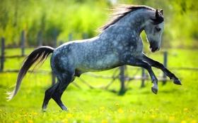 Обои лошадь, трава, изгородь, солнце, лужайка, одуванчики, зелень