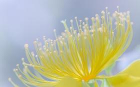 Картинка цветок, макро, желтый