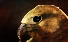 Картинка птица, кровь, клюв, art, ястреб, hawk