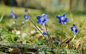 Картинка листья, цветы, голубые, травинки