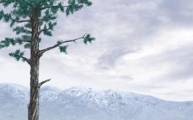 Обои горы, дерево, арт, ствол, сосна, хвойные