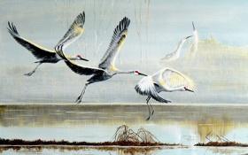 Картинка аисты, птицы, картина