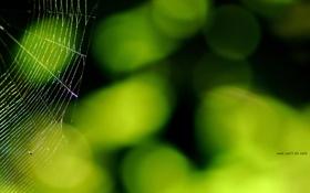 Обои паутина, зелень, свет, блики