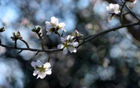 Обои природа, цвет, ветка, весна