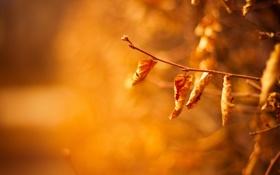 Обои природа, листья, ветки