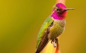 Картинка птица, краски, цвет, ветка, перья, клюв, отлив