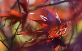 Обои листья, макро, фон
