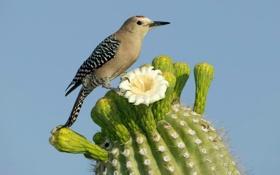 Обои цветок, природа, птица, кактус