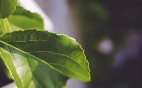 Картинка макро, зеленый, листок