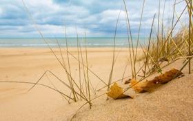 Обои песок, море, трава, макро, природа, лист