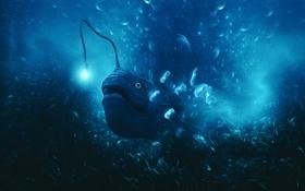 Картинка море, свет, рыба, арт, медузы