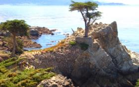 Обои море, вода, деревья, скала, камни, фото, обрыв