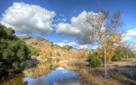 Картинка лес, трава, облака, деревья, кусты, река небо