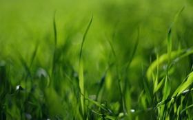 Обои поле, трава, фото, зелёный, стебельки, макро обои