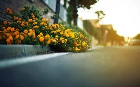 Обои дорога, асфальт, листья, дома, фокус, даль, цветочки