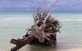 Обои море, тучи, корни, дерево, горизонт, мель, сухое
