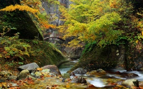 Картинка лес, деревья, горы, мост, парк, река, камни