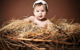 Обои дети, малыш, гнездо, ребёнок, шапочка, Анна Леванкова