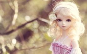 Обои роза, повязка, блондинка, кукла, игрушка, боке