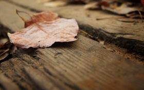 Обои сухой, макро, лист, доски