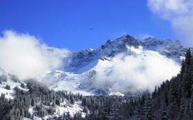 Обои снег, пейзаж, горы