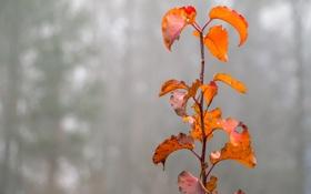 Обои осень, листья, туман, растение, ветка