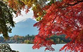 Обои осень, небо, листья, деревья, озеро, дом, Япония