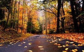 Обои дорога, осень, листья, природа, гора, colors, colorful