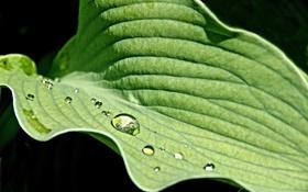 Обои капли, фон, вода, лист, размытость