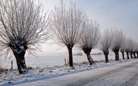 Картинка зима, дорога, деревья, пейзаж