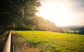 Картинка поле, лето, солнце, лучи, свет, деревья, природа